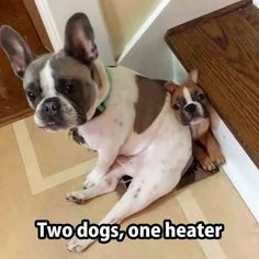 Two Dogs, One Heater