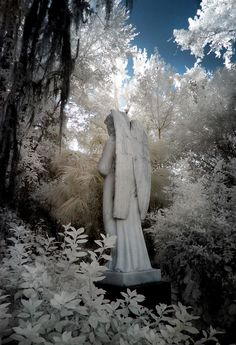 photographer Mary Homick  https://flic.kr/p/peSZex | Evergreen Cemetery | Evergreen Cemetery, Gainesville, FL Historic Cemeteries