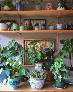 """Houseplant Club on Instagram: """"Loving the layers of texture, #houseplants and whimsy  : @thuisinhuizen thanks for sharing with the #houseplantclub """""""