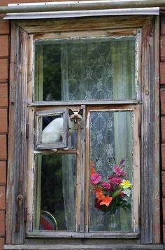 a window. a cat. lace. flowers.
