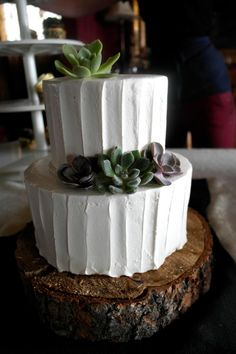 succulent 2 tier wedding cake.  so simple and perfect!