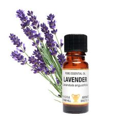 Lavender essential oil for soapnut laundry.  The most versatile and useful oil, Lavender has an abundance of uses. It relaxes and soothes the mind & body, and is number one for use in your first aid kit at home. It can be used neat on wounds & burns but care should still be taken. Lavender blends very happily with many other oils. It can be used as an insect repellent, to scent linen and deter moths. A very soothing oil.