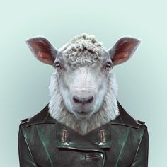 SHEEP by Yago Partal for ZOO PORTRAITS