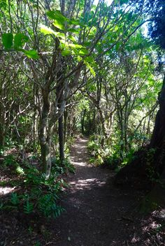 The Place of Snares: Bush walks, Birdwatching and an 800 year old Rimu… | Spin the Windrose  #workingholidayvisa #newzealand #whv #workandtravel #travel #hiking #outdoors