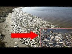 WAY Beyond Hosea 4:3 Prophecy! God Sent 1000's Blind, Dead Fish Ashore! ...