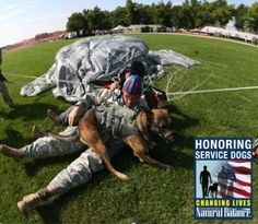 Military Working Dogs are AWESOME #MWD Support National #ServiceDogs month @Petco