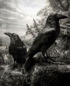 Raven Art, Jackdaw, Crows Ravens, Halloween Art, Wicca, Tattoo Inspiration, Owls, Tatoos, Vikings