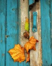 Yep we're loving blue this #autumn. Such a fab colour against rusty oranges
