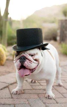#Dog Lovin' - #Dogs In #Weddings http://www.bellabellavita.com/2013/07/dog-lovin-dogs-in-weddings.html