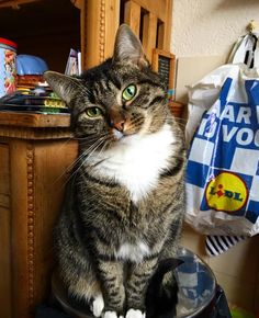 Green eyes beautiful Ixy   #cat #kat #cateyes #kattenogen #ixy #beauty #belle #beautiful #sweet #love #poes #huisdier #animal #animals #friend #instagram #instamood #instagood #insta #zon #cosey #amigo #amigos by leonsteenbergen http://www.australiaunwrapped.com/