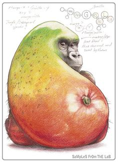 Art: Adorable Food Animals by Green on Nov 23, 2011. This image is of a mango fused with a gorilla. This is a skilfully sketched illustration. The talented artist behind this drawing is Rob Foote, from South Africa. He titled the series of the fruit and vegetable animals, Samples from the Lab, and I love this image. You can view more of Rob's work on his website. http://www.robfoote.net/2010/02/assorted-color-pics.html