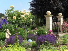 in meinem Rosengarten - Bilder und Fotos