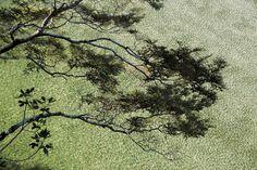 Le sud-ouest de la Nouvelle-Zélande abrite les montagnes les plus élevées, les plus vastes glaciers et les plus hautes forêts de l'archipel. Les Maoris l'appellent la terre du jade - National Geographic France