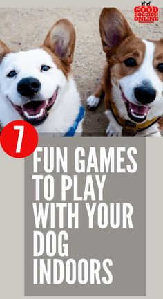 7 Fun Games to Play with Your Dog Indoors. Want to know how to play with your dog and have fun? Check out these brain training games and more to keep your dog entertained. Brain Games, Brain Training Games, Training Your Puppy, Dog Training Tips, Training Videos, Potty Training, Best Dog Toys, Best Dogs, Dog Enrichment