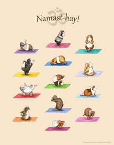 Die Yoga Meerschweinchen Collection Art Print - Yoguineas Namast-Hay süße Yoga Plakatkunst