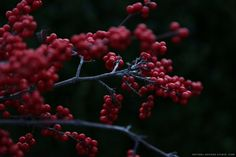 winterberry, holiday wreath making, natural designs