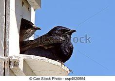 Free Plans For Purple Martin Birdhouse