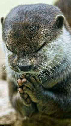 Please let it be seafood for lunch today. Amen