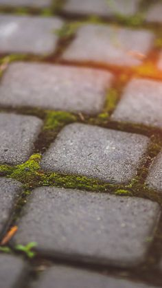 Garden Moss Stone Nature Road City Flare #iPhone #6 #plus #wallpaper