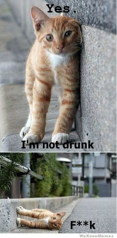 im-not-drunk-cat  @ Ahsley muma: Reminds me of Scotland. So sorry ladies!