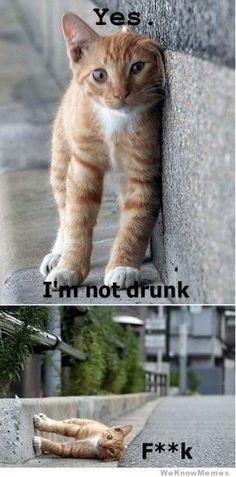 im-not-drunk-cat  @ Ahsley muma: Reminds me of Scotland. So sorry ladies!