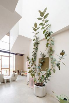 A modern living space with a large metalic planter and a large indoor planter