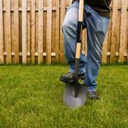 How to Get Rid of Moles in Your Yard Naturally | eHow