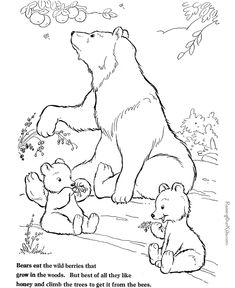 Bear Coloring Page To Print And Color