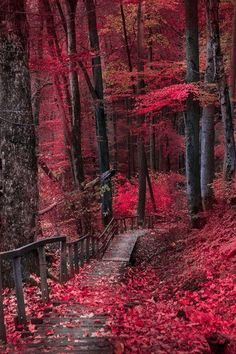 A peaceful moment | (by Robert Kovar) - Pixdaus
