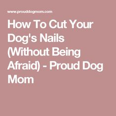 How To Cut Your Dog's Nails (Without Being Afraid) - Proud Dog Mom
