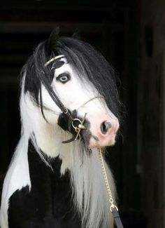Gypsy Vanner Horses for Sale Stallion Dragon Fire Most Beautiful Animals, Beautiful Horses, Beautiful Creatures, Painted Horses, Especie Animal, Mundo Animal, All The Pretty Horses, Zebras, Cheval Pie