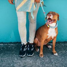 Lass'o'style  #oliviawild #lasso #itslasso #lassodogs #lassodogsoli . . #ropecollar #dogcollar #qualitycollar #ropeleash #dogleash #qualityleash #shopifypicks #dogs #instadog #weeklyfluff #dogsofinstagram #dogdailyfeaturesss #dogs_of_instagram #dogoftheday #instagramdogs #pittiesofinsta #pitbullsofinstagram #dontbullymybreed #pitbulllife #bullyinstagram #myinstapit #pitbullgram_ #buzzfeed #buzzfeedanimals #huffpost by lassodogs