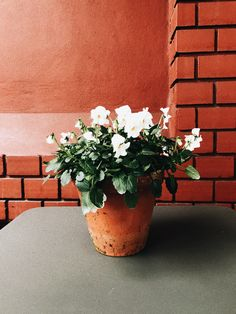 Blumen/ Pfanzen/ Urbanjungle/ orange/ plant/ Inspiration/ Home