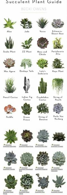 Newest Absolutely Free cactus plants names Tips Plants and cacti would be the g., Newest Absolutely Free cactus plants names Tips Plants and cacti would be the g…, # Types Of Succulents, Cacti And Succulents, Planting Succulents, Planting Flowers, Types Of Cactus Plants, Cactus Types Names, Succulents Wallpaper, Succulents Drawing, Propagating Succulents