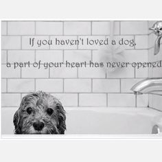 Love #dogs  #dogquotes
