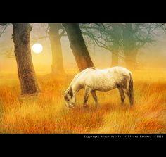 """""""White Horse in the Fog"""" by Alvar Astulez"""