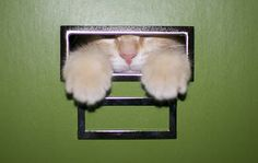 15 photos of cats in boxes