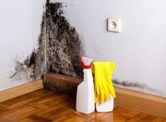A good mold and mildew remover will treat stains on a variety of surfaces. We researched the best mold removers so you can keep your spaces sparkling clean. Toxic Black Mold, Remove Black Mold, How To Remove, Best Mold Remover, Mold And Mildew Remover, Mold Removal, Deep Cleaning Tips, Cleaning Hacks, Effects Of Black Mold