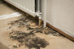 Do You Have Signs of Damp in Your Property?