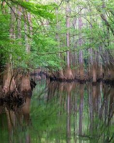 Congaree National Park, South Carolina. Photo by Altrendo Travel