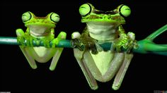 General 1920x1080 frogs animals nature amphibians