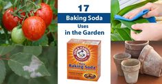 Do you know you can use baking soda for plants? Here are 17 hacks on how to use baking soda in the garden that you will find useful.