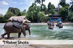 Sumatra, elefant, riding elefant, Indonesia, olifant, jungle