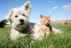 Dogs are often infected by intestinal parasites.