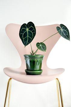 Buy Bergs Potter Copenhagen Glazed Plant Pot and Saucer - Emerald - Small Space Interior Design, Interior Design Living Room, Living Room Designs, Interior Decorating, Room Inspiration, Interior Inspiration, Le Large, Pots, Clay Jar