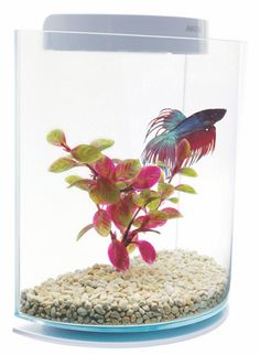 your first aquarium hemdal jay f