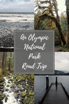 Wander wild beaches, hike through dense mossy rainforest, climb snow capped mountains and enjoy the best views on an Olympic National Park road trip. Washington State | USA | Travel | Olympic National Park . Read more at www.liverecklessly.com