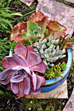 Beautiful Succulents - The Outlaw Gardener: The Vashon Island Northwest Perennial Alliance Garden Tour Part Four: The Garde of Cindy & Steve Stockett