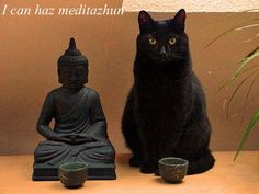 Meditation cat I think that most cats are actually masters of the art, and some attempt to share their gift of just being.