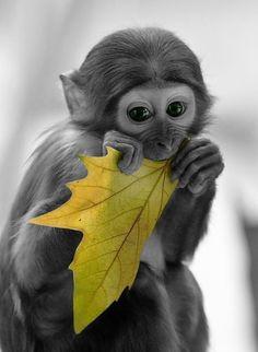 Monkey and a sheet.
